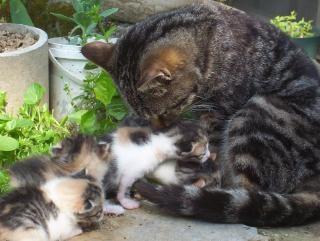 gato, comer