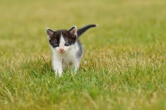 Gato adorable en el césped