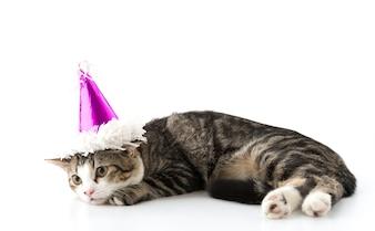 Gato con sombrero de fiesta