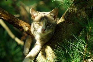 gato en el árbol, la piel