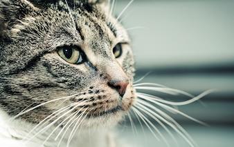 Gato mirando hacia un lado