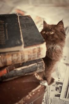 Gato mirando libros antiguos