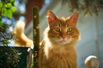 Gato rubio al lado de una maceta