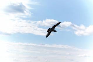 gaviota en vuelo libre