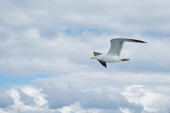 Gaviota volando en el cielo con nubes