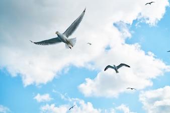 Gaviotas volando con nubes de fondo
