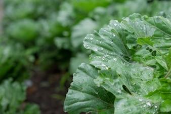 Gota de agua en las verduras