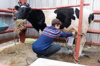 Granjero joven trabajando en la granja orgánica con una vaca lechera