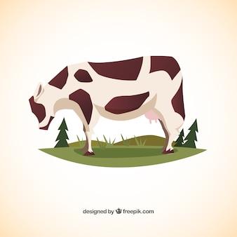 Granzing vaca