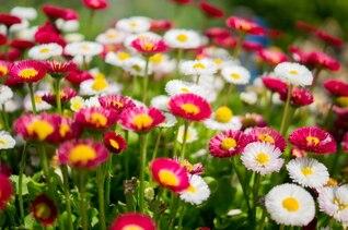 Grupo colorido de las flores