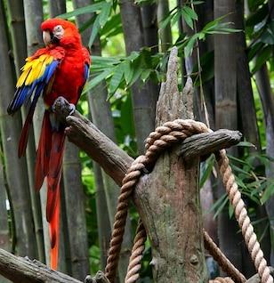 guacamayo loro pájaro plumas tropical brillante