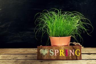 Hermosa flor con hierba verde fresca en la mesa de madera. Horizontal con espacio de copia. Pascua, Concepto De La Primavera.