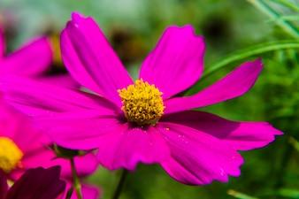 Hermosa flor rosa