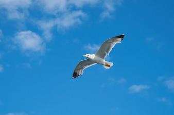 Hermosa gaviota con el cielo de fondo