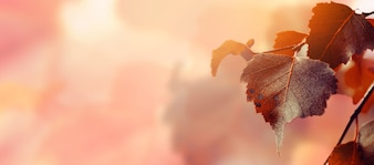 Hermosas hojas de otoño sobre fondo rojo de otoño Soleado Daylight Horizontal Toning