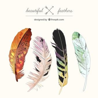 Hermosas plumas