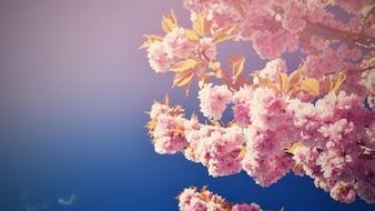 Hermoso árbol de flores. Escena de la naturaleza con el sol en día soleado. Flores de primavera. Fondo borroso abstracto en primavera.