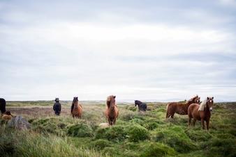 Hermosos caballos en estado salvaje