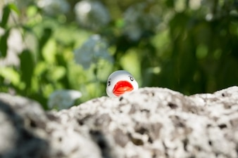 Pato oculto