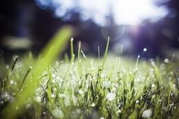 Hierba borrosa en la mañana