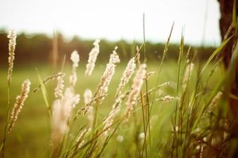 Hierba del verano al atardecer