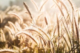 Hierba en el prado y la puesta del sol