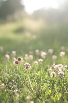 Hierba verde con flores antes de la puesta del sol