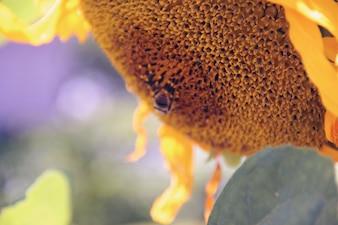 Hoja de fondo floral temporada de la flora desenfoque