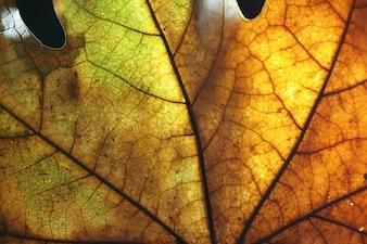 Hoja seca de otoño de cerca