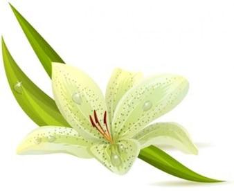 hoja verde - flores de la primavera