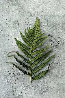 Hoja verde de helecho sobre fondo de hormigón
