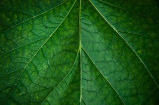 Hoja verde textura