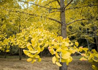 Hojas amarillas en otoño