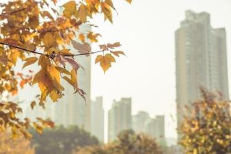 Hojas amarillas y edificios lejanos, otoño