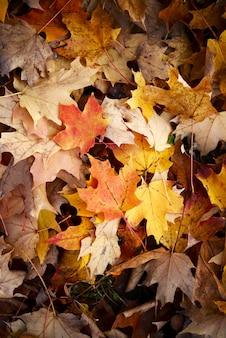 Hojas de otoño de fondo