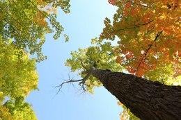 Hojas de otoño marco