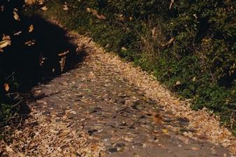 Hojas de otoño sobre el terreno,