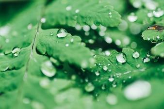 Hojas de un árbol con gotas de agua