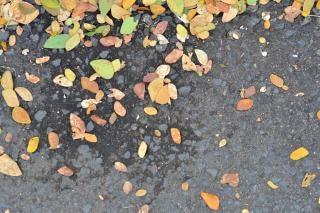 hojas en el asfalto