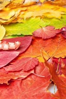 hojas natural