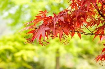 Hojas rojas en una rama