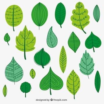 Hojas verdes illustración