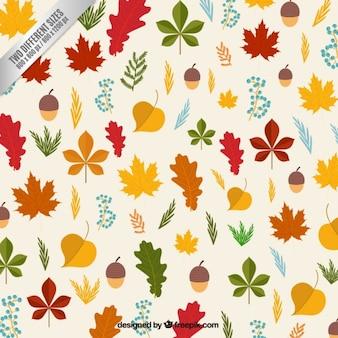 Hojas y avellanas de otoño de fondo