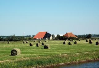 holandés campos agrícolas