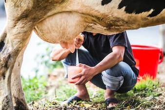 Hombre ordeñando a una vaca