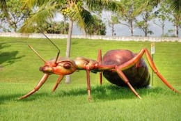 hormiga gigante, West Palm Beach, Florida, enero
