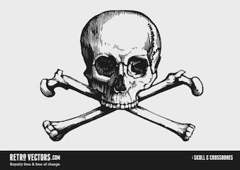 Huesos del cráneo y de la cruz