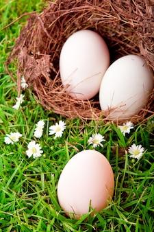 Huevos en jerarquía en hierba verde fresca de primavera