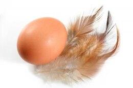 huevos y las plumas