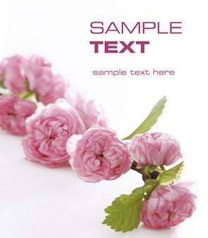Imagen de flor rosada calidad de los materiales